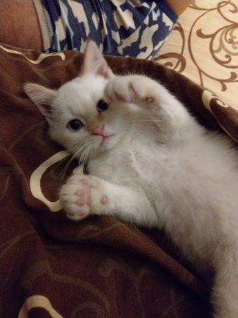 Отдам котенка в хорошие руки, срочно!