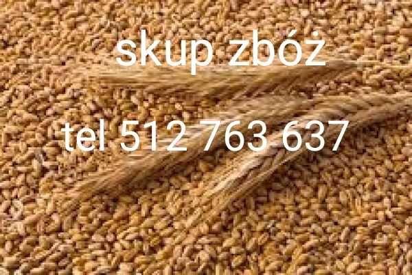 Skup zbóż ROG-HANDEL