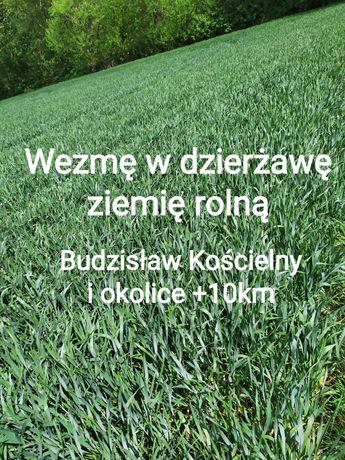 Dzierżawa ziemia rolna