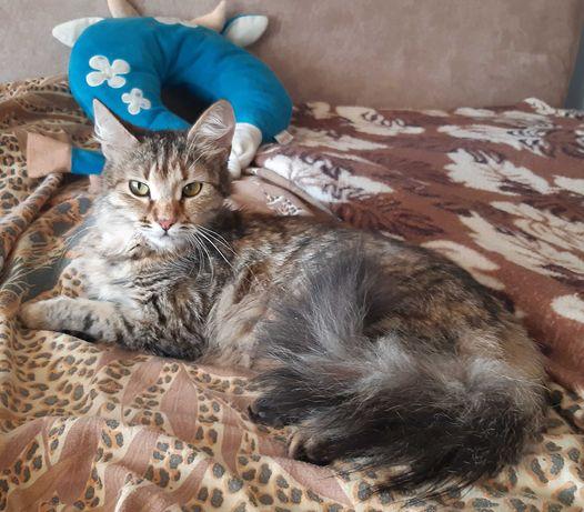 Красивая и скромная кошечка Леся