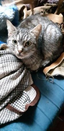 Отдам вискасного кота, 3 года ,кастрирован