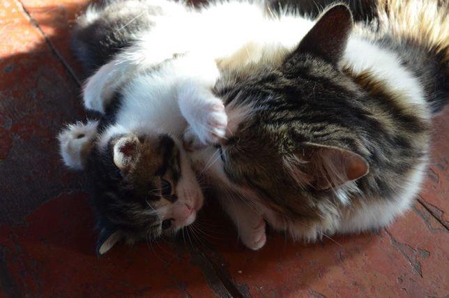Очароватльные котята