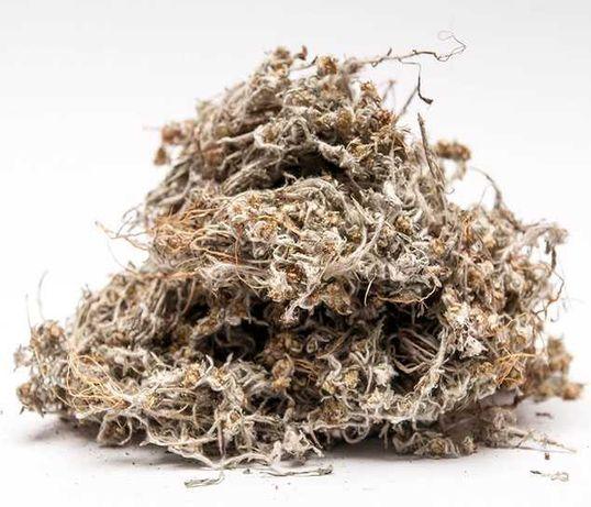 Сушеница трава сухая