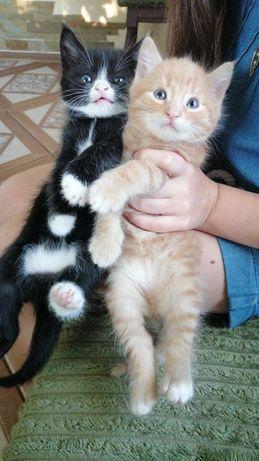 Котенята в добрі руки