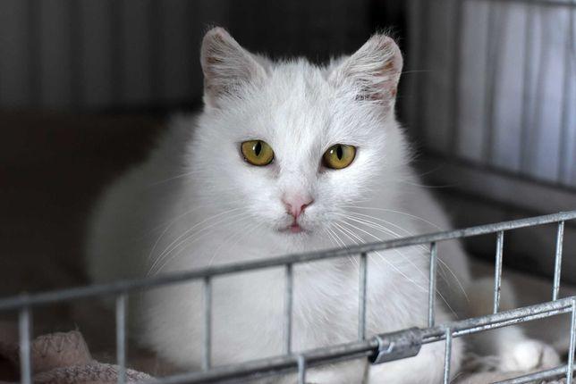Śnieżka - biała kotka do adopcji - Toruń/cała Polska