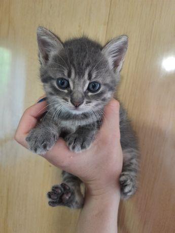 Отдам котят в хорошые руки