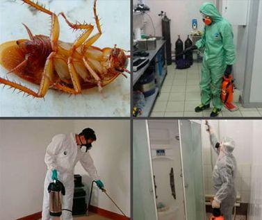 Уничтожение насекомых: тараканов, клопов, клещей, блох.