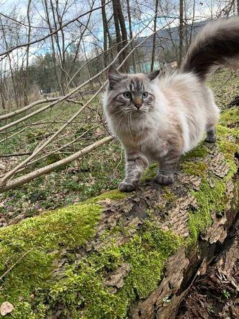 Zaginął kot ,  Skawica , Białka