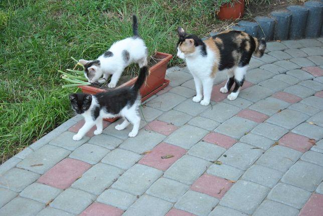 Kociaki kotki koty szukają domu