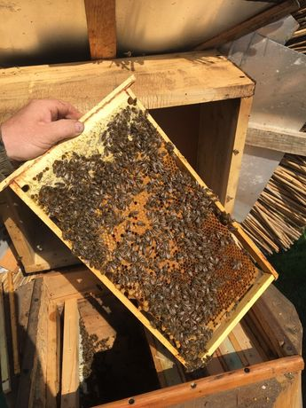 Odkłady pszczele - ramka warszawska