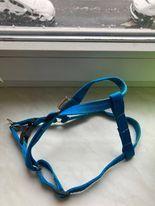 Niebieskie szelki dla psa marki Champion