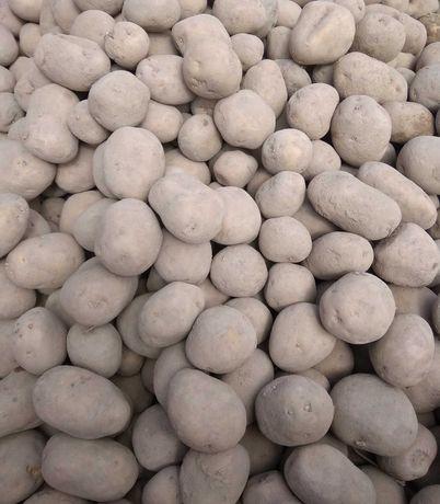 Ziemniaki przemysłowe Zuzanna, klasa B, 200kg, 35-55 kaliber