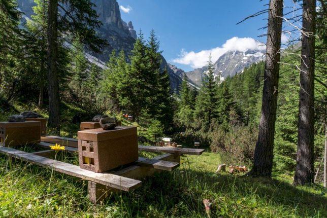 Бджоломатки Карніка Маха (від Георга Маха) Німмечина