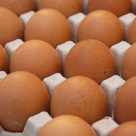 Инкубационное яйцо Бройлер КОББ500 молод,КОББ500,РОСС308,708