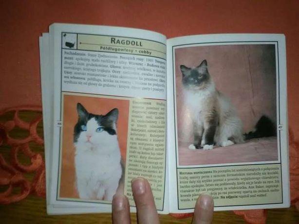 Koty minikompendium