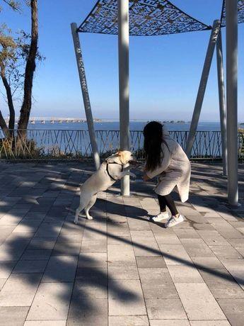 Выгуливаю собак на Оболоне и не только
