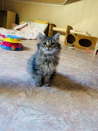 Котенок ищет любящую семью