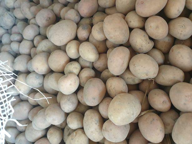 Ziemniaki irga kaliber 35-45