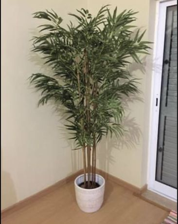 Planta - decoração