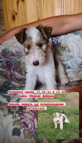 Потерялся щенок  в Долгинцевском районе