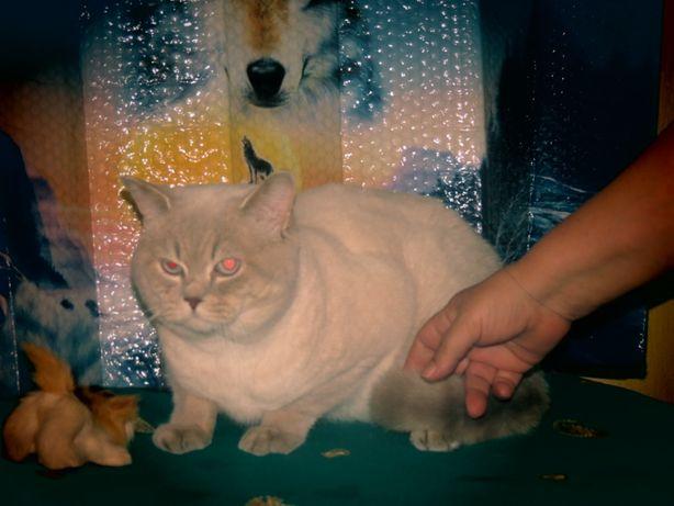 Приглашаем кошечек на свидание к коту неземной красоты.