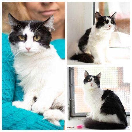 Хорошенькая черно-белая кошечка Шери, кошка, 2-3 года