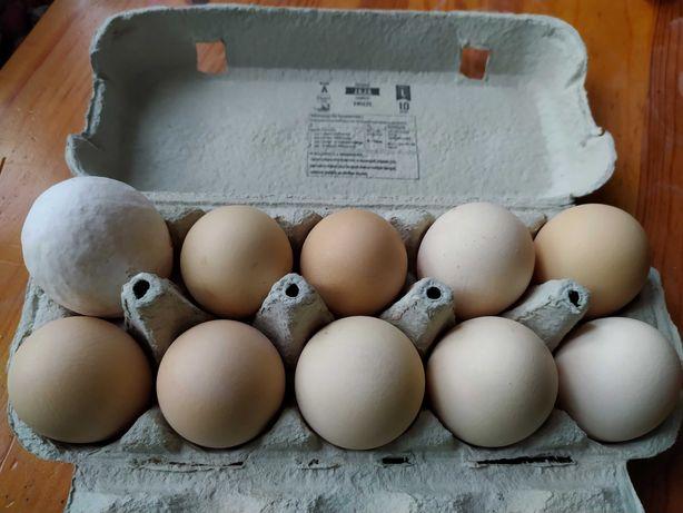 Ekologiczne wiejskie jajka