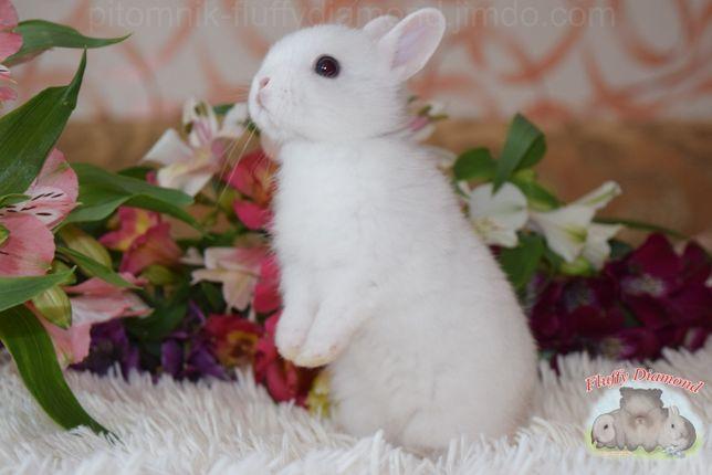 Крольчата породы Гермелин! Самая маленькая порода в Мире! Кролик.