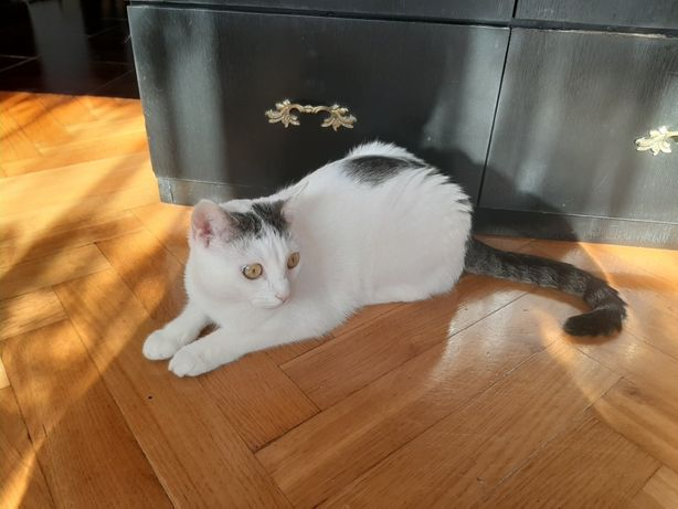 Urocze koty po stracie pana szukają nowego kochającego domu