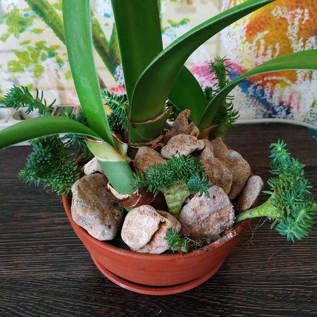 Интерьерные комнатные растения