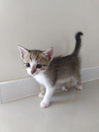 Kotka 2 miesięczna