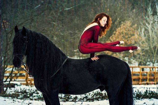 Фризские лошади в наличии