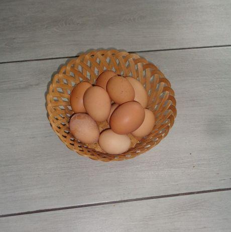 Jajka świeże WIEJSKIE