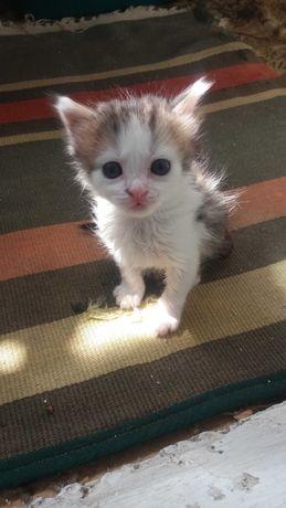 Котёнок мальчик без породы