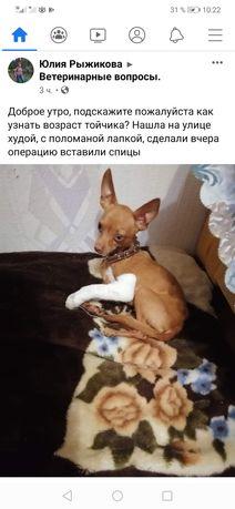 Нашли собаку пропала собака