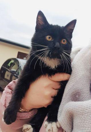 Piekna kicia szuka domku z innym kotem