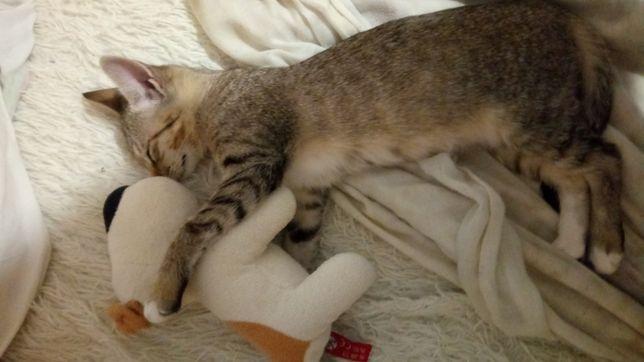 Отдам котенка в хорошие руки, котенок, кошка, кот