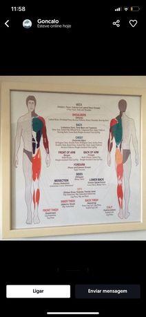 Quadro c/Diferentes grupos musculares