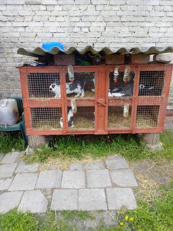 Duża klatka dla królików