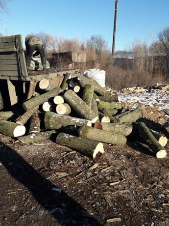 Дерево дуб граб ясень Дрова порізані та поколоті
