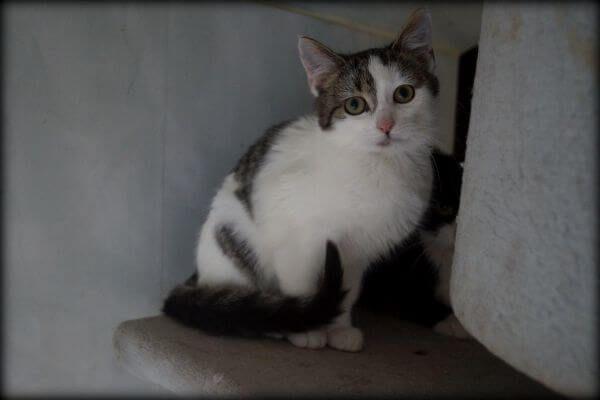 Danusia - nieśmiała kotka szuka nowego domku