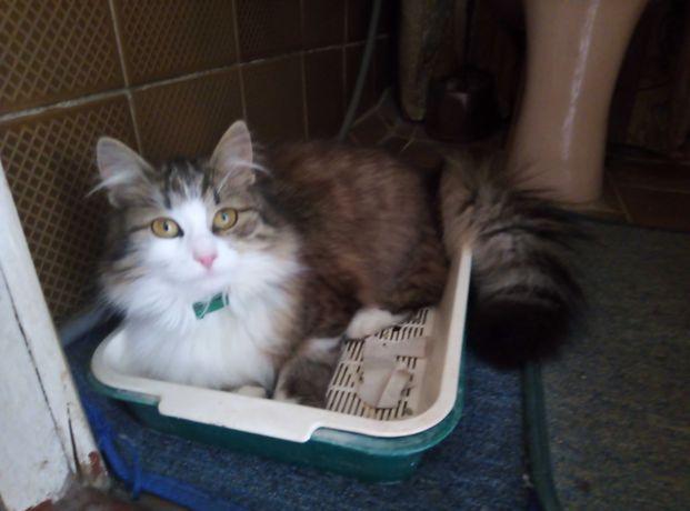 Пропала кошка Песочин