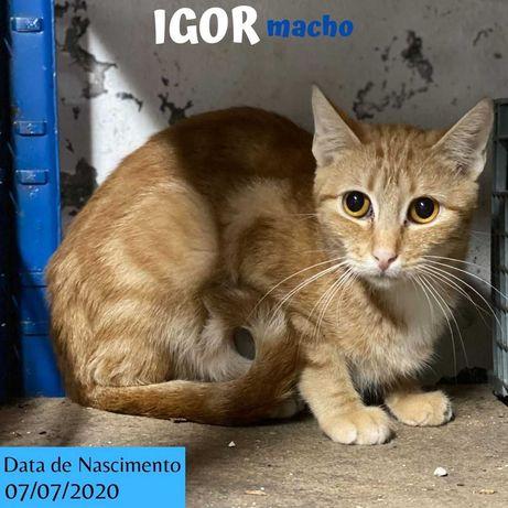 Gato Para Adoção (Igor)