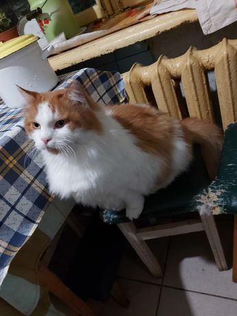 Отдам даром котика