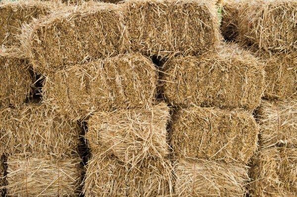 Продам сено в тюках разнотравье 50 грн,.