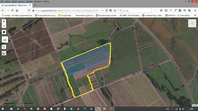 13,5 ha - grunty rolne sprzedam , gmina skwierzyna