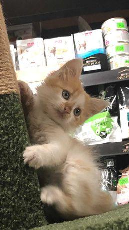 Котёнок девочка 1,5 мес в добрые ручки