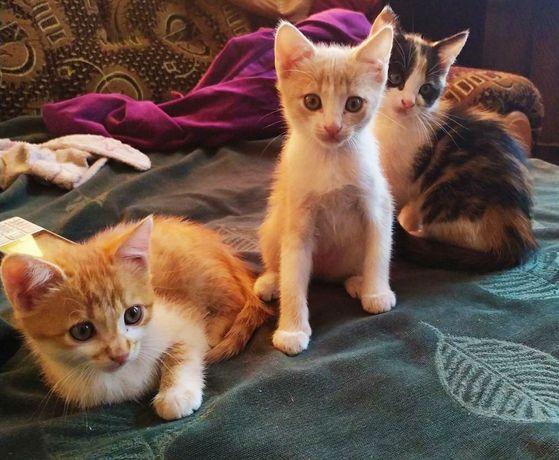 Ищут дом, ищу родителей для малышек, котята, кошечки, подарю котёнка