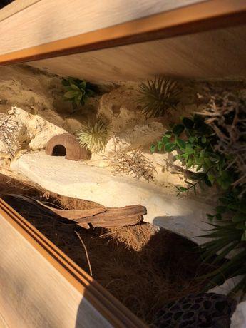 Terrarium 80x40x40 eublefar gekon lamparci wąż agama