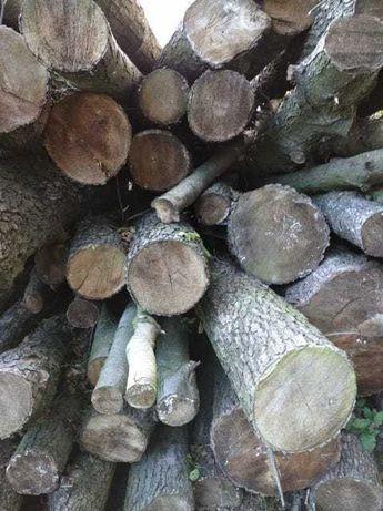 drzewo olszyna ,olcha ponad 30metrow